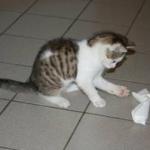 Das ist Elli. Sie ist nun 12 Wochen alt. Geschickt von Lutz Heilmann, der jetzt eine kleine Katze hat.
