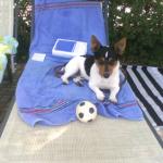 Das ist Attila, der Hund des zukünfitgen Ministerpräsidenten von Thüringen, Bodo Ramelow